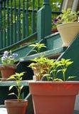 Frühes Gemüse und Blumen in den Pflanzern lizenzfreie stockfotografie