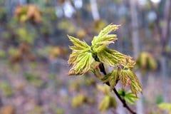 Frühes Zeichen des Frühlinges Stockbilder