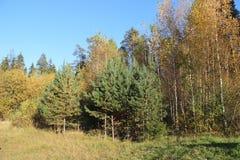 Frühherbst-Bäume fangen an, sich gelb zu drehen stockfoto
