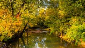 Frühherbstfarbe entlang einem Nebenfluss in ländlichem Adams County, Pennsylv Lizenzfreie Stockbilder