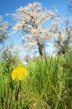 Frühjahr Stockfotos