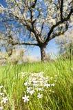 Frühjahr Lizenzfreies Stockbild