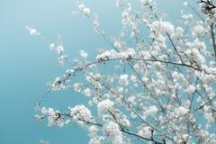 Frühjahr Lizenzfreies Stockfoto
