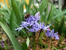 Frühjahr Lizenzfreie Stockfotos