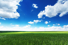 Frühjahr am Ackerland Grünes Weizenfeld und bewölkter Himmel Stockfotografie