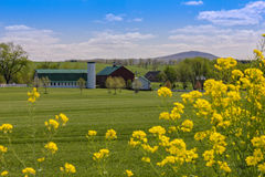 Frühjahr auf dem Bauernhof Stockfotos