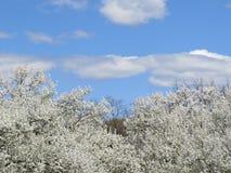 Frühjahr-Bäume Stockfoto