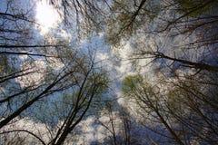 Frühjahr-Baum-Überdachung Lizenzfreie Stockfotografie