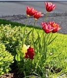 Frühjahr-beständige Garten-Blumen stockbild