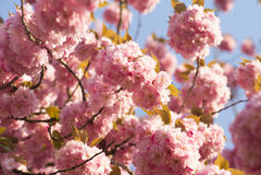 Frühjahr-Blüte Stockfotografie