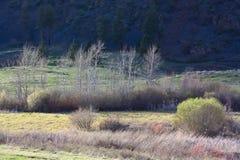 Frühjahr in den Fluss-Sumpfgebieten Stockfotografie