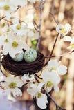 Frühjahr-Eier und Nest Lizenzfreie Stockfotografie