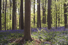 Frühjahr im Wald stockfotos