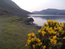 Frühjahr am Lough Talt See Stockbilder