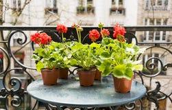 Frühjahr mit roten Pelargonien auf einem Balkon in Paris, Frankreich stockbild