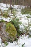 Frühjahr-Natur in Finnland - eine Nahaufnahme eines Waldes stockfoto
