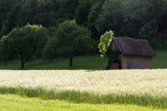 Frühjahr vallley Rasen mit einem Hütten- und Maisfeld Lizenzfreies Stockbild