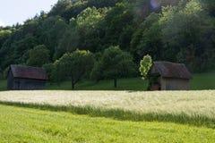 Frühjahr vallley Rasen mit einem Hütten- und Maisfeld Lizenzfreie Stockbilder