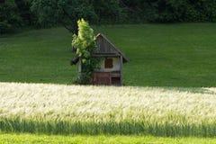 Frühjahr vallley Rasen mit einem Hütten- und Maisfeld Lizenzfreie Stockfotos