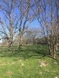 Frühjahr vor der Blätterbildung stockfoto
