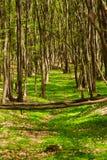 Frühjahr-Wald 5 Stockfotos