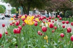 Frühjahr in Waltham Lizenzfreie Stockfotografie