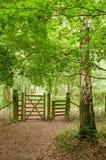 Frühjahrbäume in der englischen Landschaft Stockfotografie