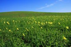 Frühjahre lizenzfreie stockfotos