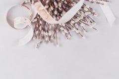 Frühjahrhintergrund mit dem Bündel Pussyweidenzweigen, festgezogen durch Band lizenzfreies stockfoto