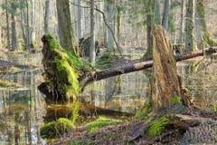 Frühjahrmorgen im Wald Stockfotos