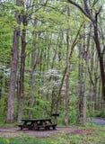 Frühjahrpicknickplatz mit Blumenhartriegel lizenzfreie stockbilder