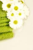 Frühjahrversprechung Stockbild