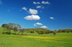 Frühjahrwiese Stockfotografie