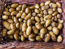 Frühkartoffeln Lizenzfreie Stockfotografie