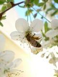 Frühling Stockfotos