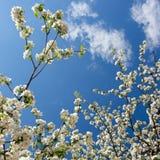 Frühling. Lizenzfreie Stockfotografie
