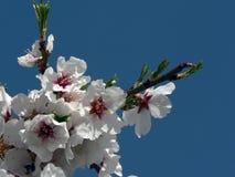 Frühling Lizenzfreies Stockbild