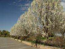 Frühling Lizenzfreie Stockfotos
