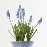 Frühling! Lizenzfreie Stockfotografie
