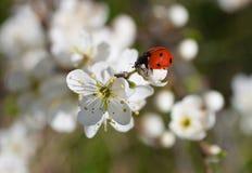 Frühling Stockbild