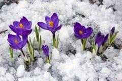 Frühling Stockfoto
