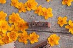 Frühling Lizenzfreies Stockfoto