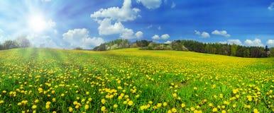 Frühling Stockbilder