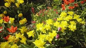 Frühling Arbeiten im Garten Bewässerungsblumen stock footage