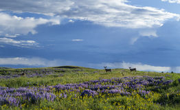 Frühling auf Casper Mountain Wyoming Lizenzfreie Stockfotos