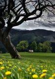 Frühling auf den Hügeln Stockfotos