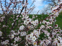 Frühling auf der Seite einer Straße Lizenzfreie Stockfotos