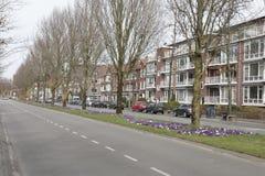 Frühling auf der Straße Stockfotografie