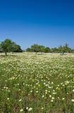 Frühling auf Mallorca Lizenzfreies Stockfoto