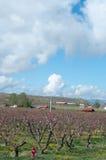 Frühling auf Obstgarten-MESA Stockbild